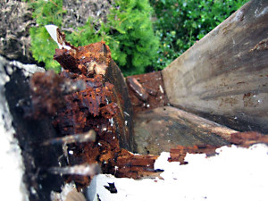 Portland's #1 Contractor for Identifying and Repairing Dry Rot.