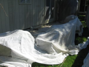 Exterior painting plant covers portland, OR.