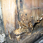 dry rot repair on interior wood rot footing