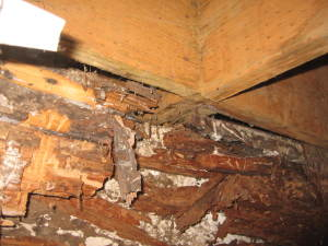 Dry Rot Due to Construction Defect