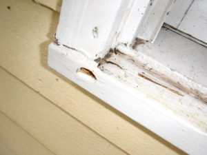 Leaking window in Seattle, Washington. SFW Construction LLC.