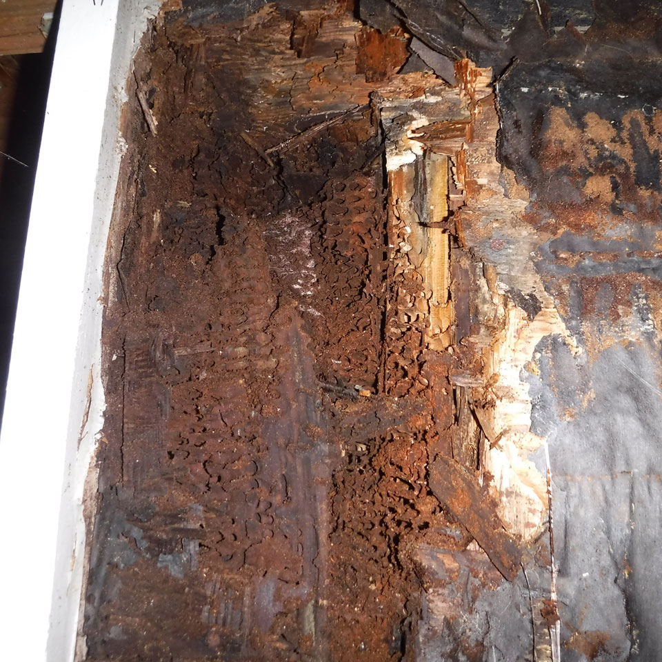 Issaquah Dry Rot