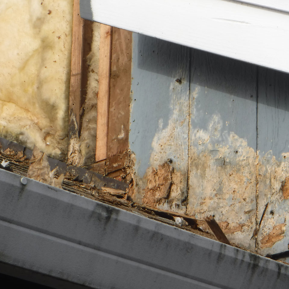 Lake Oswego Dry Rot Repair