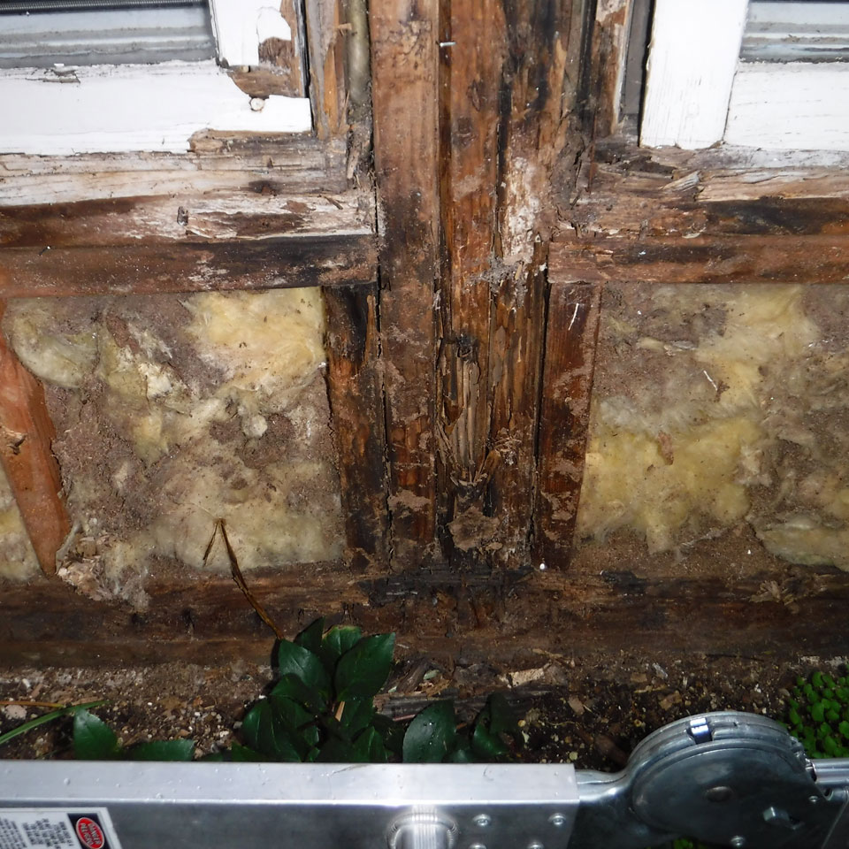 McMinnville Dry Rot