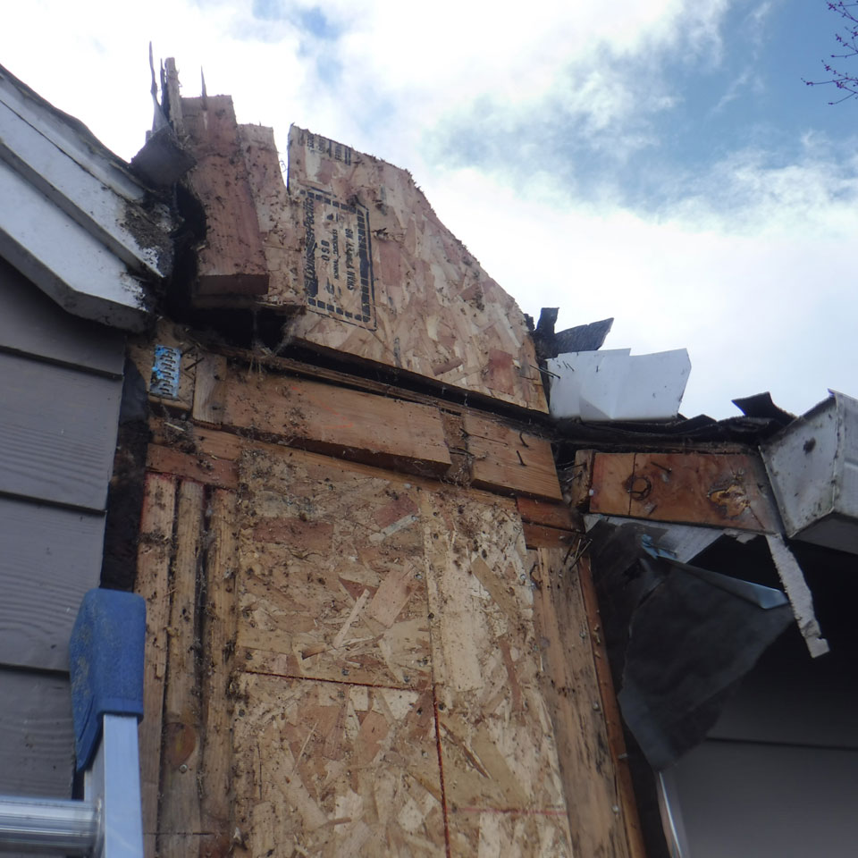 Tigard Dry Rot