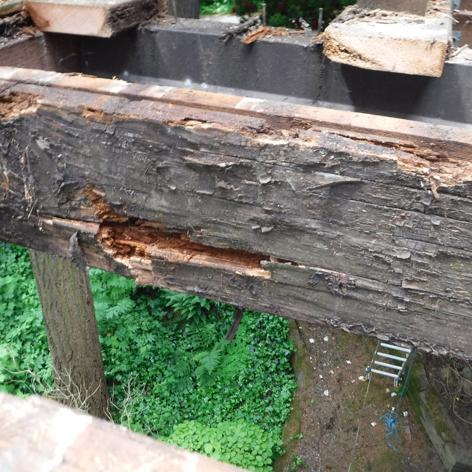 Bothell Dry Rot