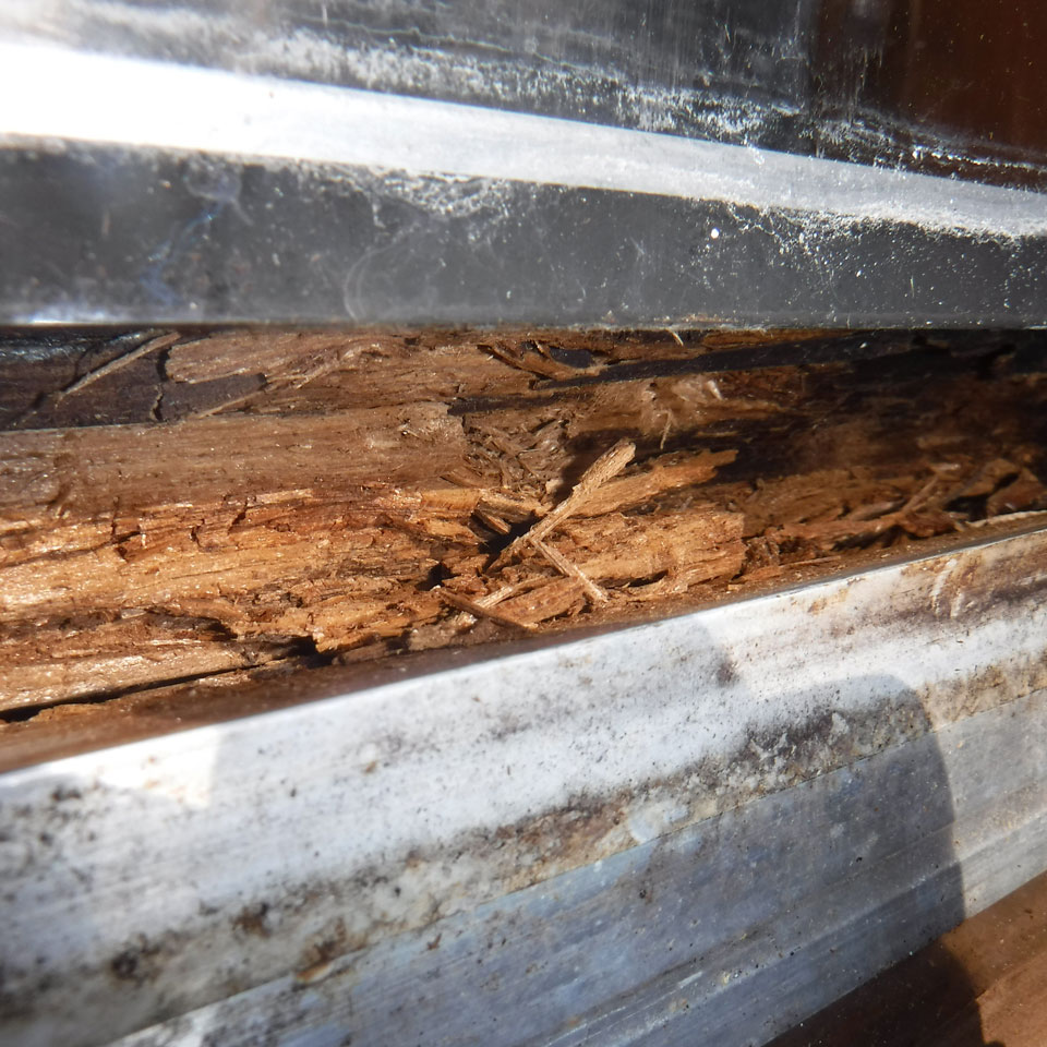 Keizer Dry Rot