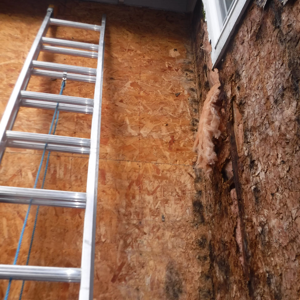 Newcastle Dry Rot