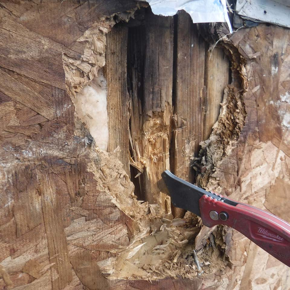 How To Tell If You Have Dry Rot