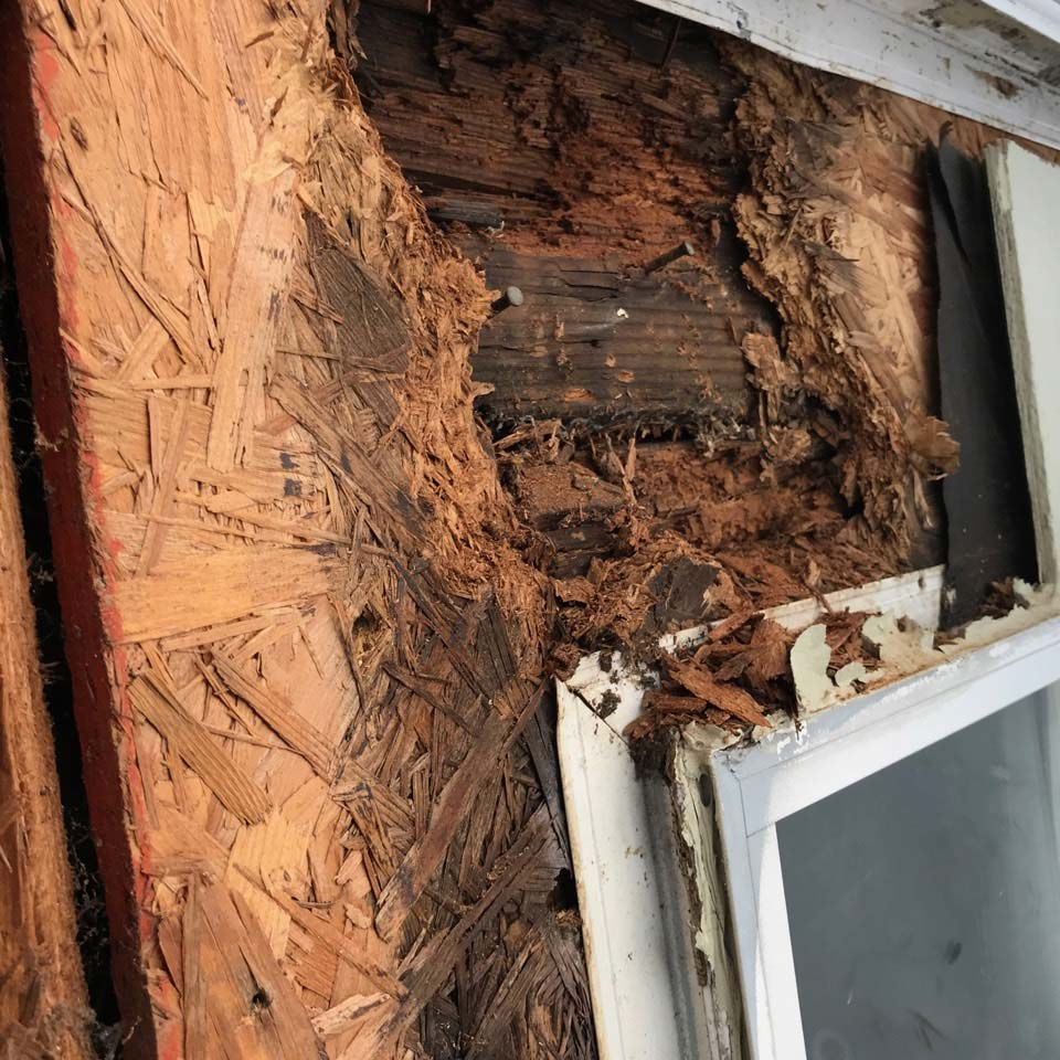 Rotted Wood Around Window