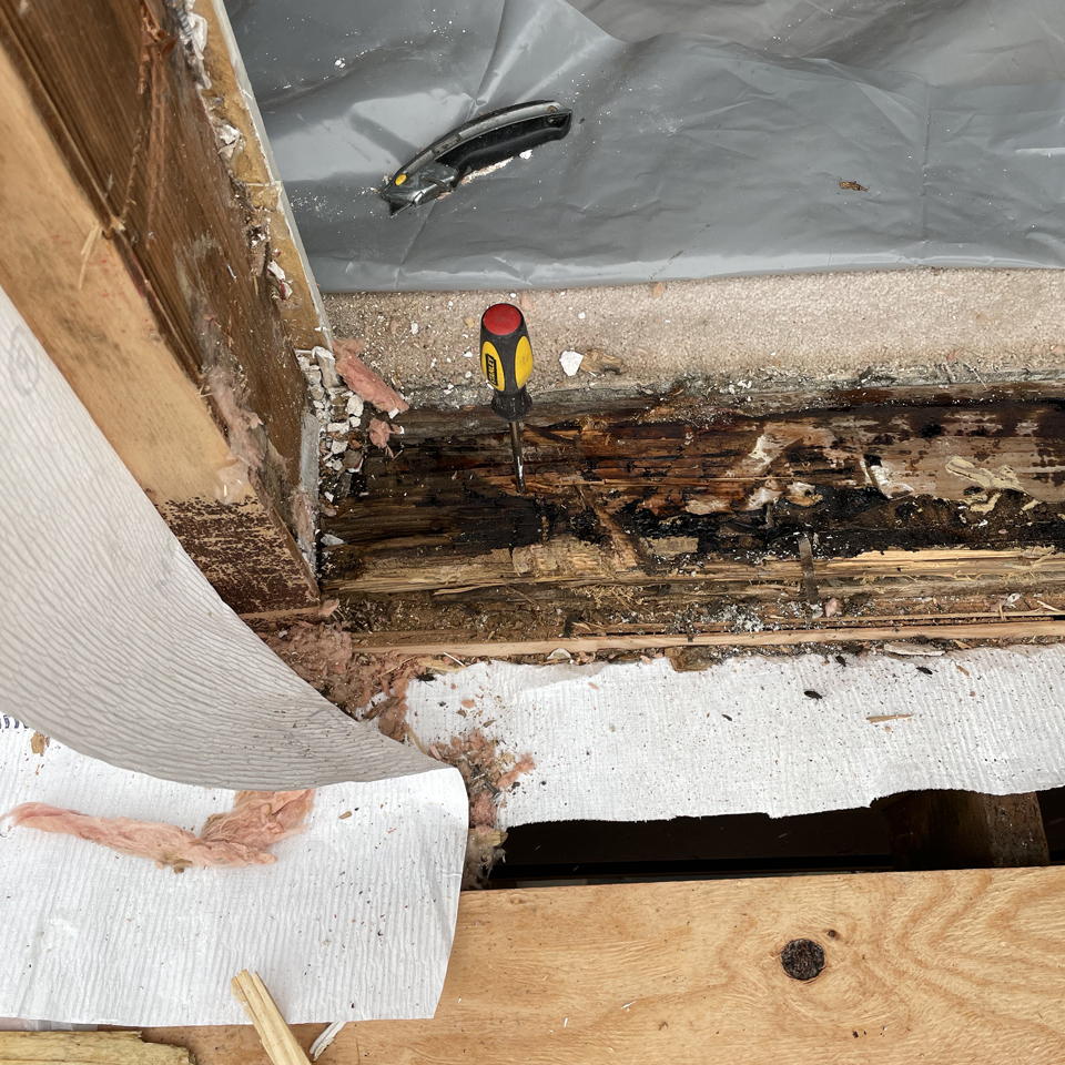How To Know You Have Dry Rot